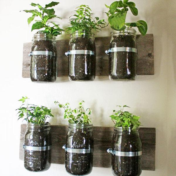 jars container garden