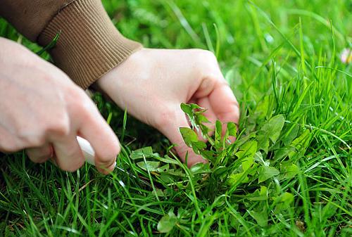 organic weeding