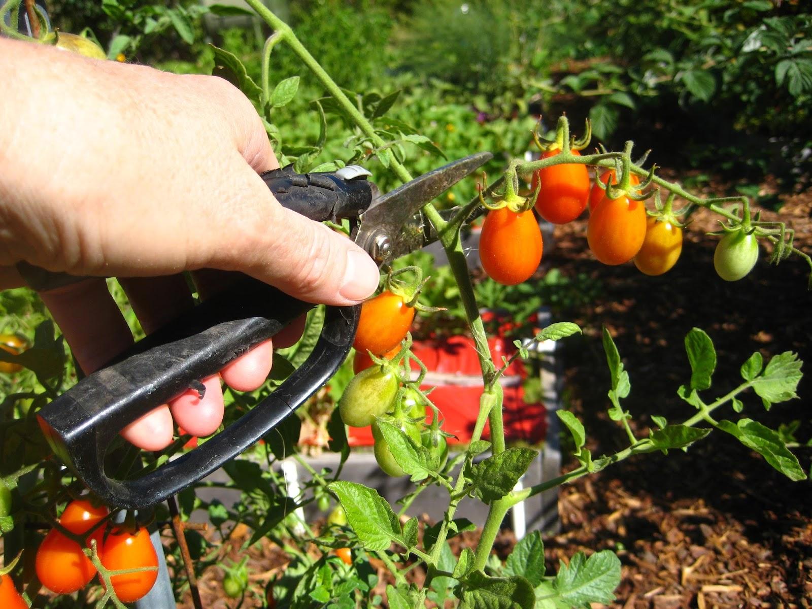 Vegetable Garden Bed Ideas