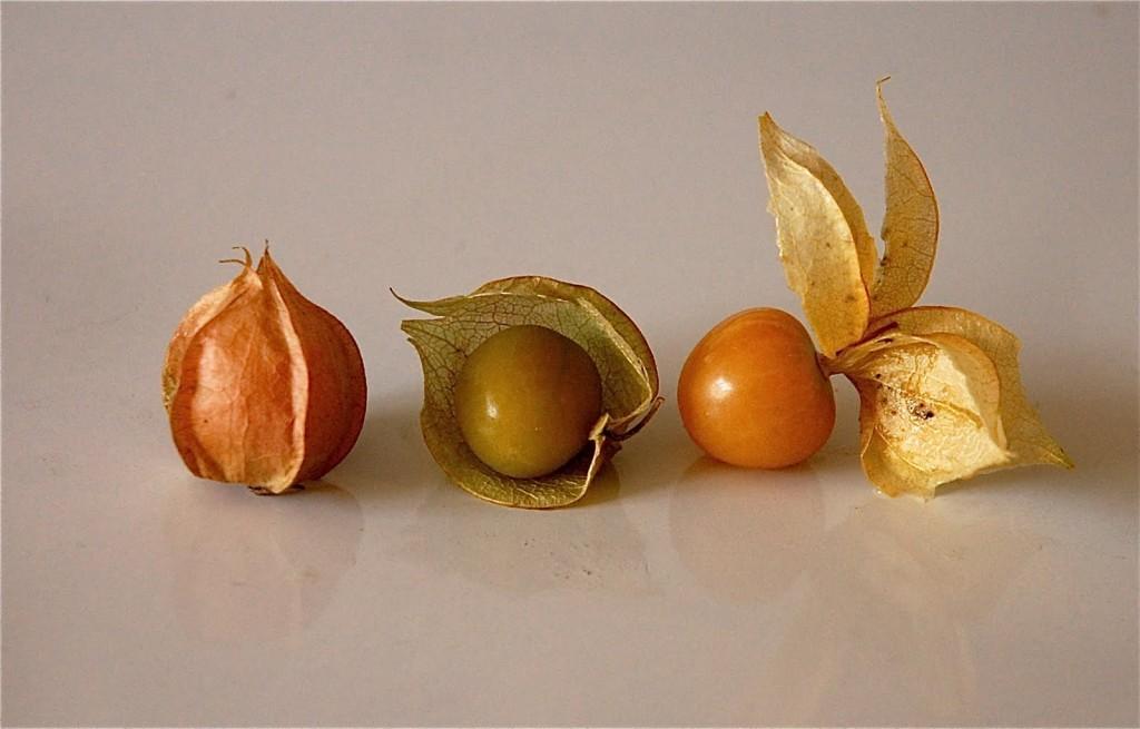 husk tomato or ground cherry