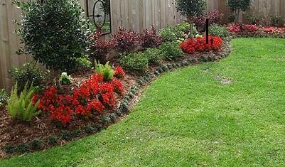 BJ Ambis Gardening