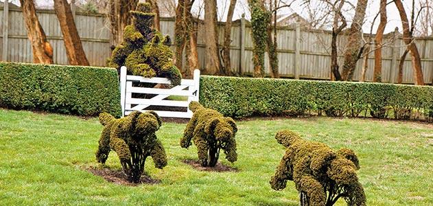 pruned plants