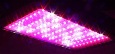 color of led grow lights